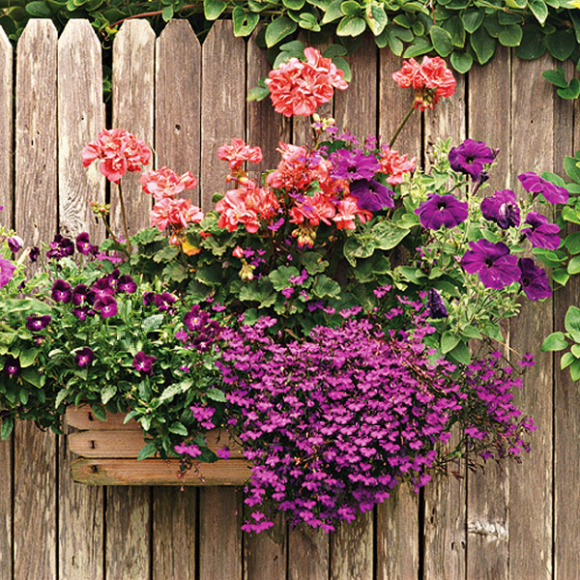 Подвесной садик на деревянном заборе