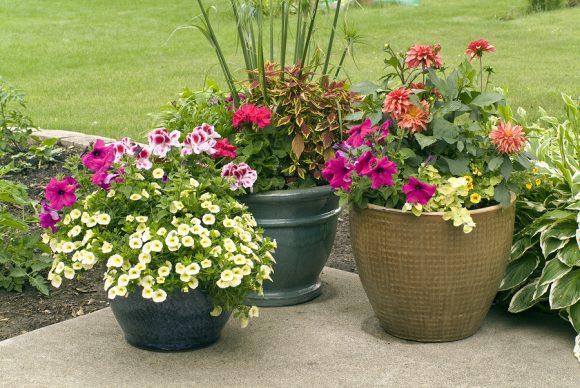 Растения в вазонах на садовом участке