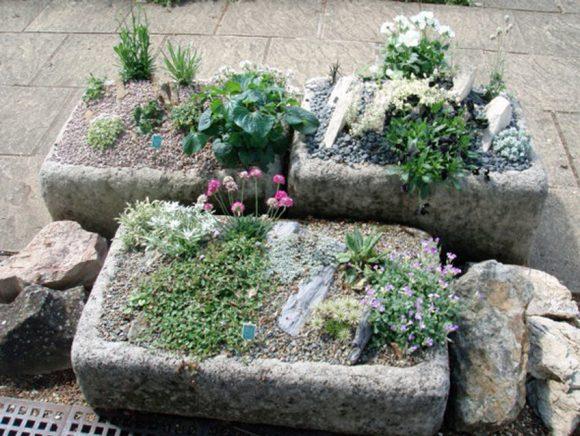 Мини-рокарии в каменных кашпо