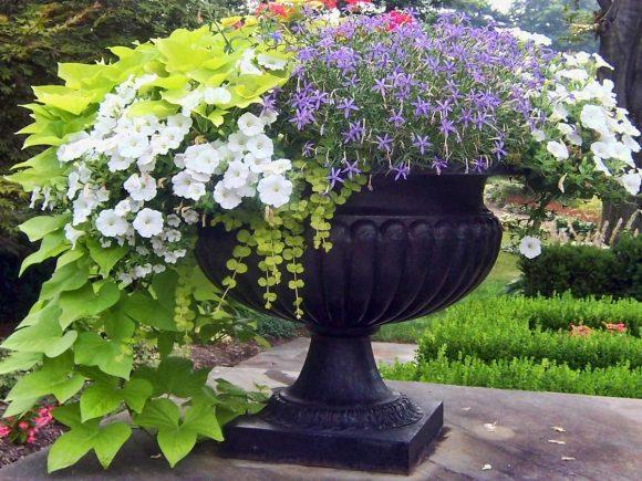 Красивая цветочная композиция в вазоне, оформленная плющом