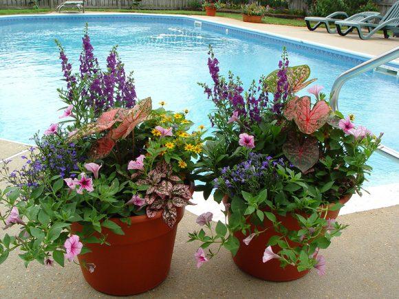 Красивые цветочные композиции из однолетних растений