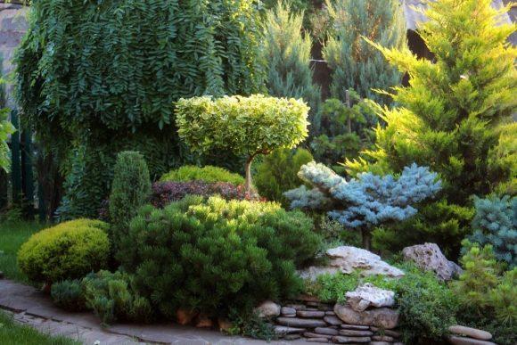 Альпийская горка, декорированная хвойными растениями