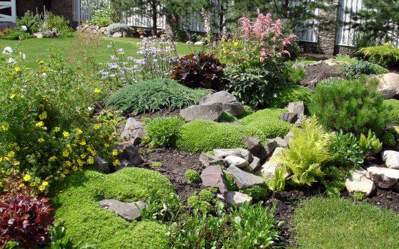 Рокарий, декорированный хвоей и цветущими кустарниками