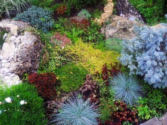Альпийская горка с голубой елью и цветами