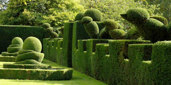 Фигурная живая изгородь из хвойных растений