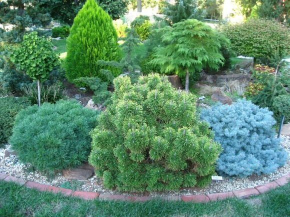 Эффектная садовая клумба