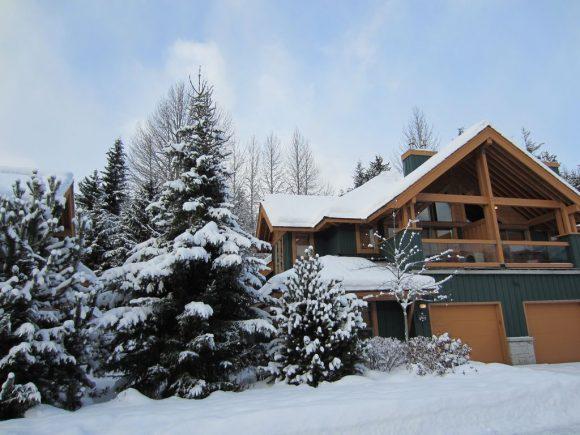 Хвойники на даче зимой