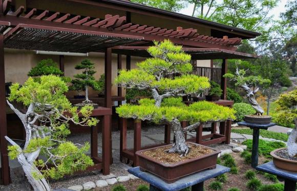 Контейнерный бонсай в садовом дизайне