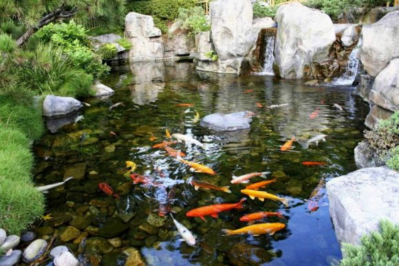 Небольшой пруд, заселённый рыбками