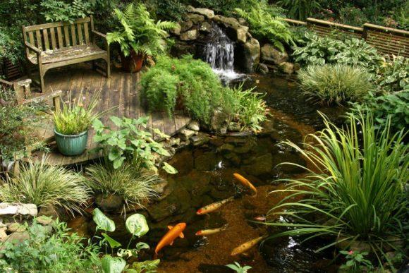 Маленький живописный пруд с рыбками