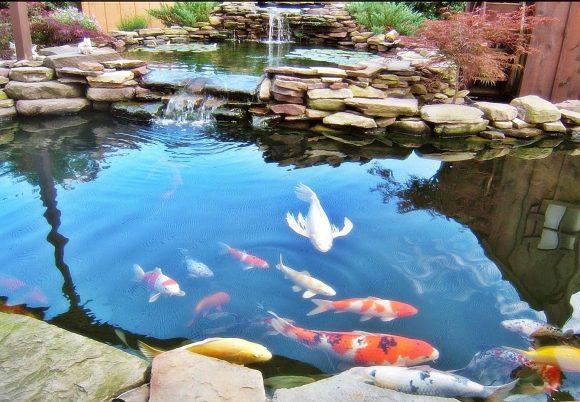 Рыбы в искусственном водоёме