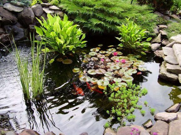 Небольшой пруд с водными растениями