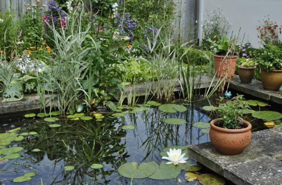 Пруд с клумбой и растениями в вазонах