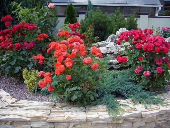 Рокарий, декорированный можжевельником и розами