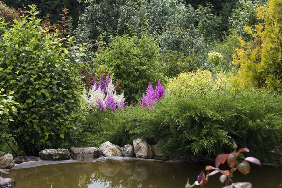 Берег пруда, декорированный цветущими кустарниками и можжевельником