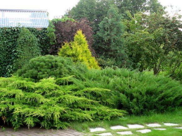 Оформление садовой тропинки можжевельником