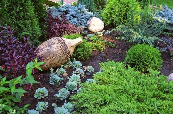 Клумба с можжевельником, хвойниками и каменной розой