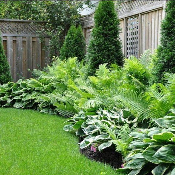 Живая изгородь из хвойников, хосты и папоротника