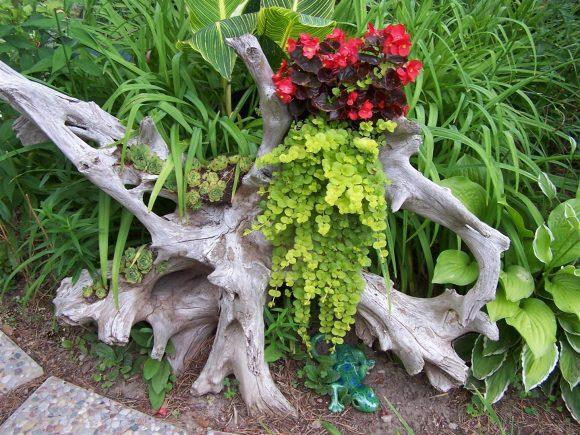 Маленький садик из коряги и растений