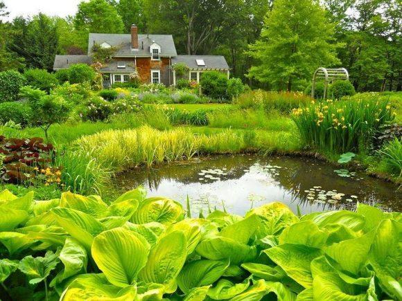 Природный пруд, оформленный хостой