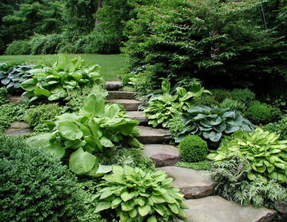 Садовая лестница, украшенная хостой
