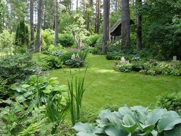 Лесной дизайн садового участка