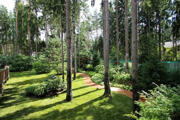 Сосновый лес на дачном участке