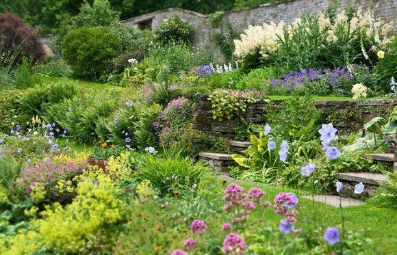 Лужайка в саду природного дизайна