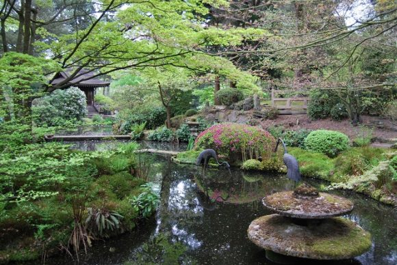 Пруд в саду естественного дизайна