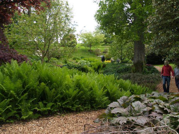 Папоротник в пейзажном саду
