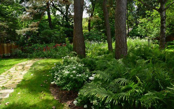 Тенистый уголок сада с папоротником и жасмином