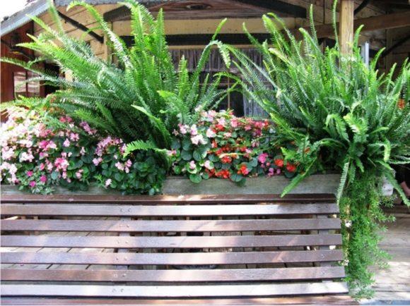 Композиция из цветов и папоротников у террасы загородного дома