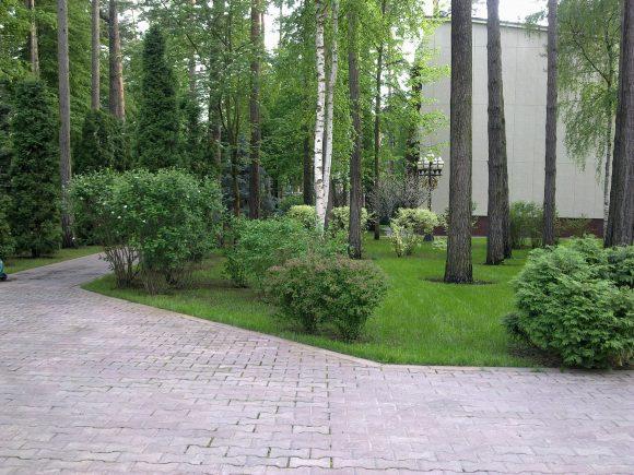 Сосны и берёзы в саду