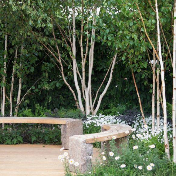 Садовая лавочка под берёзами