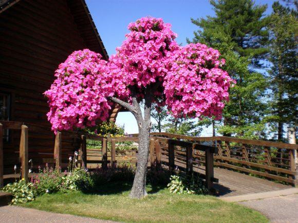 Композиция из ампельной петунии на кроне сухого дерева