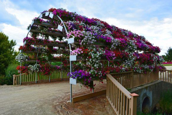 Цветочная аркада из контейнерной петунии