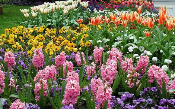 Эффектная цветочная композиция с гиацинтами