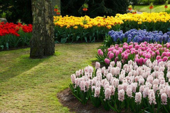 Композиция из разноцветных гиацинтов