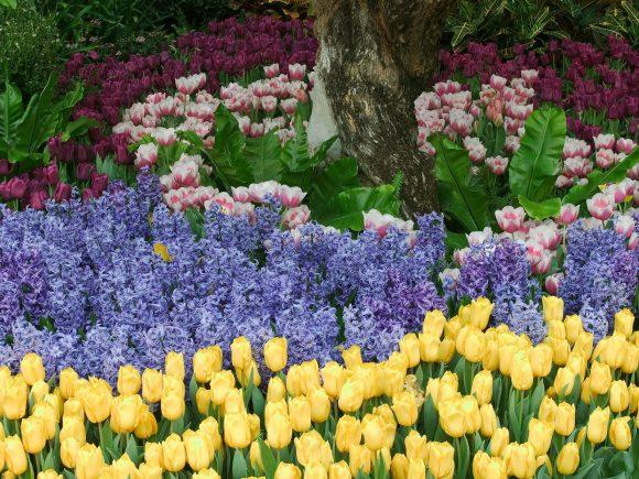 Композиция из гиацинтов и тюльпанов