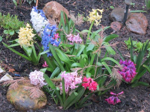 Каменно-цветочная композиция с гиацинтами
