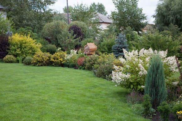Цветущая спирея на садовой рабатке