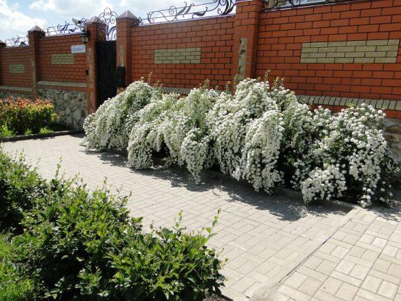Живописная изгородь у ворот загородного дома