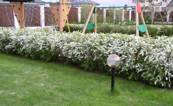 Цветущая изгородь вокруг детской площадки