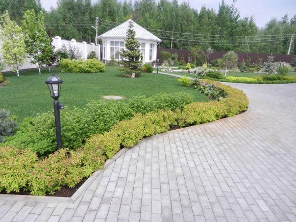 Карликовая спирея у садовой дорожки