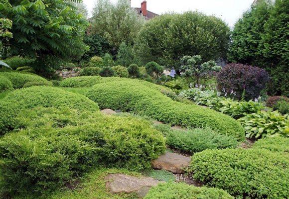 Вариант оформления спиреей сада природного дизайна