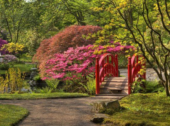 Розовая спирея на берегу ручья