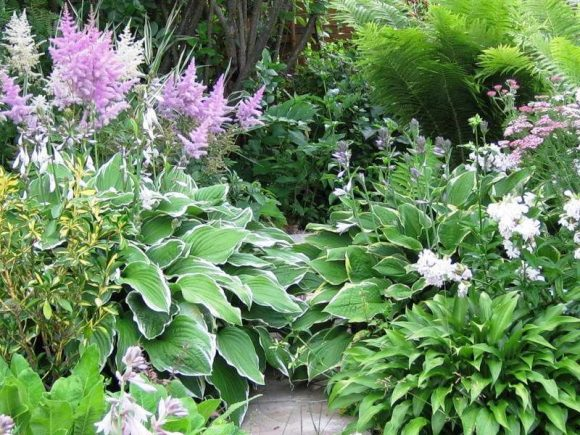Астильба, хоста и папоротник в саду пейзажного дизайна