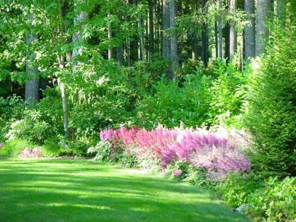 Астильба и хвойники саду природного дизайна