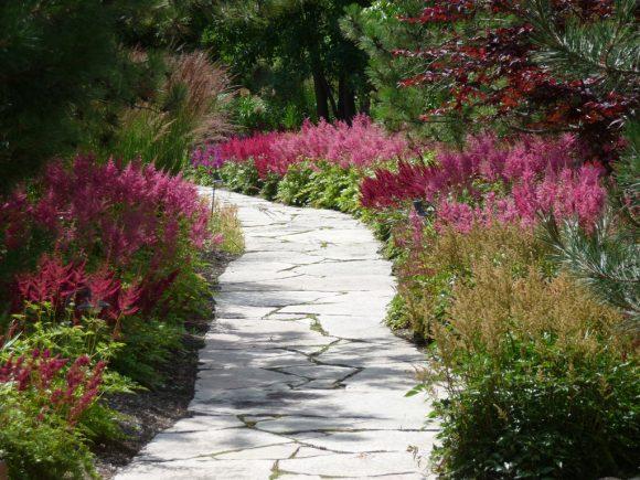 Садовая дорожка с бордюром из астильбы