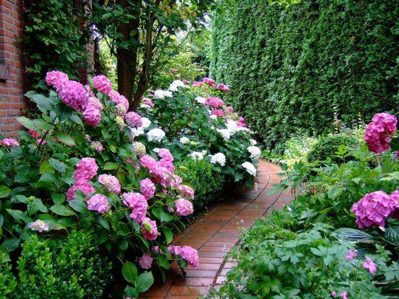 Красочный бордюр из гортензии и многолетних растений у садовой дорожки